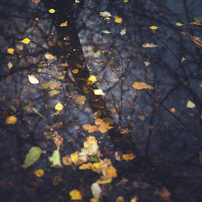 Fallen Leaf Photograph - Falling Into Place by Chris Dale