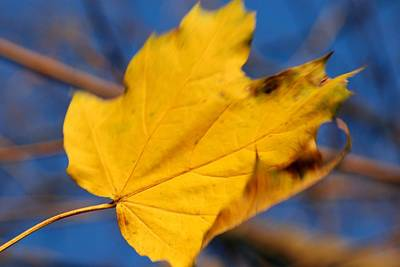Photograph - Falling Leaf by Angie Tirado