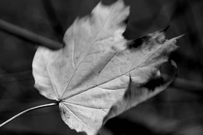 Photograph - Falling Leaf In Black And White by Angie Tirado