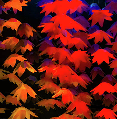 Rights Managed Images - Falling Leaves Royalty-Free Image by Aaron Geraud
