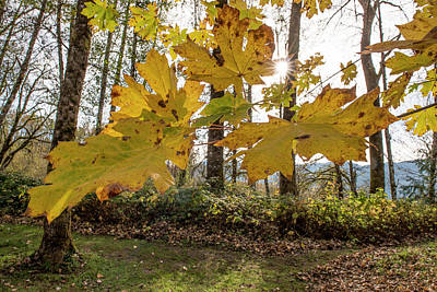 Photograph - Falling Leaves by Bob VonDrachek