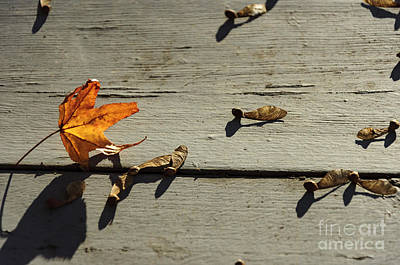 Photograph - Falling Leaves by Debra Fedchin