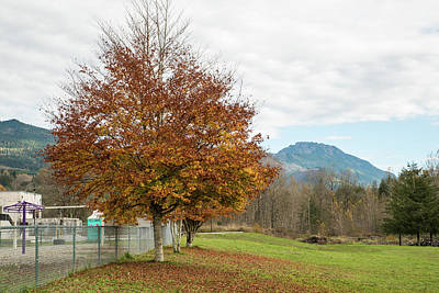 Photograph - Falling Leaves In Silo Park by Tom Cochran