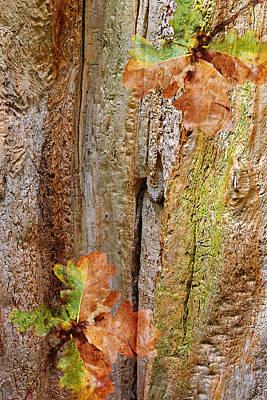 Photograph - Falling Oak Leaves by Gill Billington