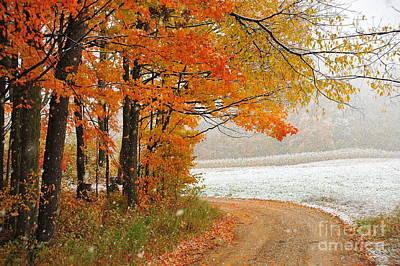 Falling Snow In Autumn Art Print by Terri Gostola