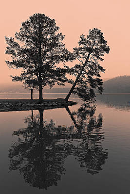 Art Print featuring the photograph Falling Tree Reflections by Ron Dubin