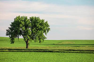 Montana Photograph - Fallon County Tree by Todd Klassy
