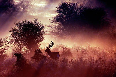 Fallow Deer In Fairytale World Art Print by Roeselien Raimond