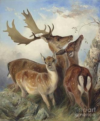 Fallow Deer Painting - Fallow Deer by MotionAge Designs