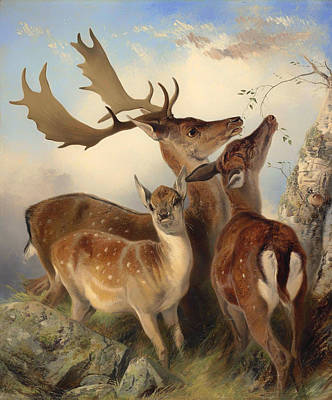 Fallow Deer Painting - Fallow Deer by Mountain Dreams