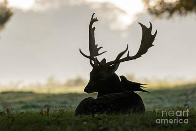 Photograph - Fallow Deer With Friend by Paul Farnfield
