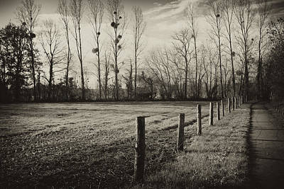 Leaves Photograph - Fallow Field And Mistletoe by Hugh Smith