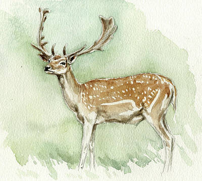 Fallow Deer Painting - Fallow Stag by Chris Pendleton