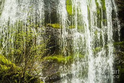 Photograph - Falls And Spring Green by Patricia Babbitt