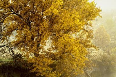 Photograph - Fall's Beauty by Scott Bean