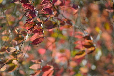 Photograph - Fall's Blush by Photography by Tiwago