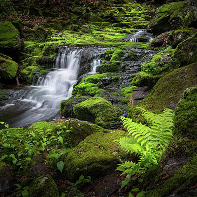 Photograph - Falls Brook 2016 by Bill Wakeley
