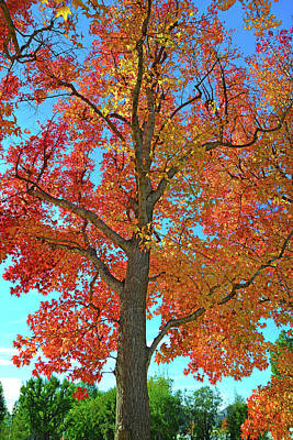 Photograph - Fall's Farewell by Lynn Bauer