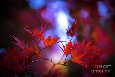 Photograph - Falls Fiery Cataclysm by Mike Reid