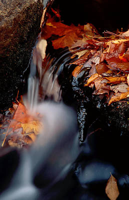Photograph - Falls Foliage by Jim DeLillo