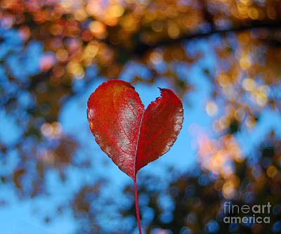Photograph - Fall's Heart by Debra Thompson