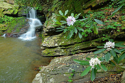 Photograph - Falls On Catawba Creek by Alan Lenk