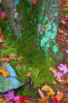 Photograph - Fall's Randomnly Vibrant Hues by Polly Castor