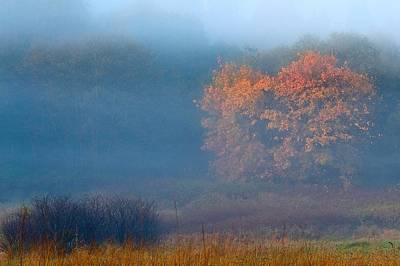 Photograph - Falltime In The Meadow by Scott Holmes