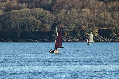 Photograph - Falmouth Working Oyster Boats by Terri Waters
