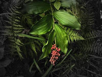 Photograph - False Solomon's Seal With Berries by Joe Duket