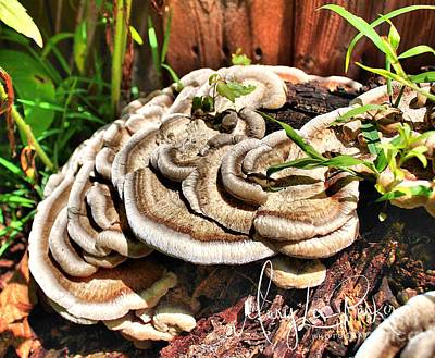 Photograph - False Turkey Tail by MaryLee Parker