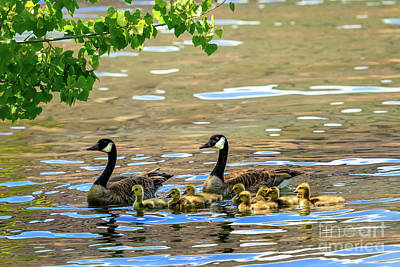 Photograph - Family Affair by Robert Bales
