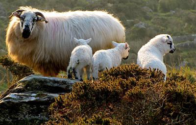 Photograph - Family by Barbara Walsh