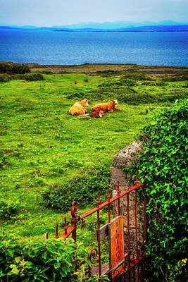 Photograph - Family Coastal Farm In  Ireland by Debra and Dave Vanderlaan