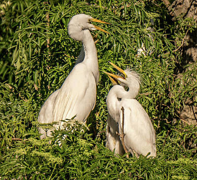Photograph - Family Conference by Jane Luxton