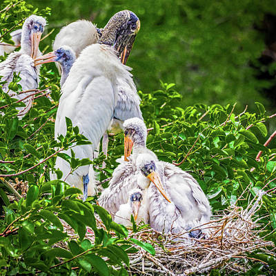 Photograph - Family Nest by Robin Zygelman