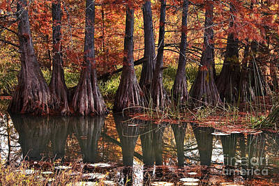 Art Print featuring the photograph Family Of Cypress At Lake Murray by Tamyra Ayles