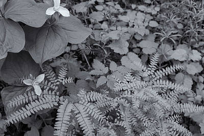 Photograph - Family Of Flora by Kunal Mehra