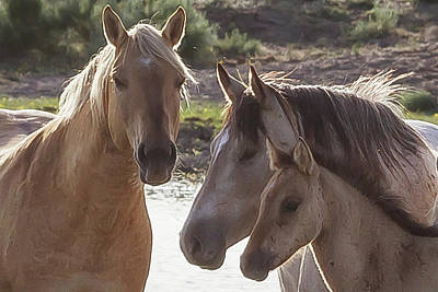 Photograph - Family Of Horses by Belinda Greb