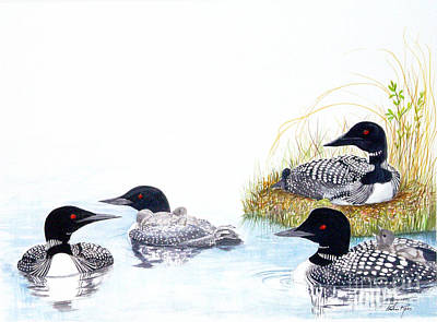 Family Of Loons Art Print by Pauline Ross