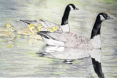 Canadian Geese Drawing - Family Outing by Debra Sandstrom