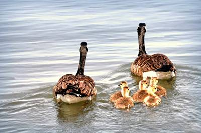 Photograph - Family Outing by Diana Angstadt