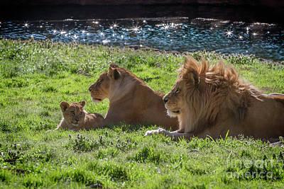 Photograph - Family Pride by Karen Jorstad