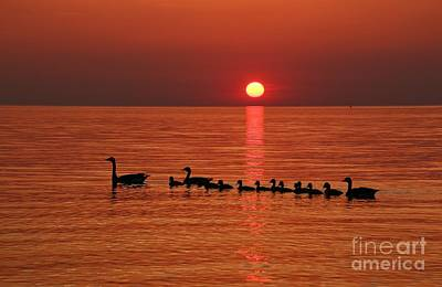 Photograph - Sunset Family Outing by Tony Lee