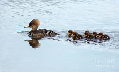 Photograph - Family Swim by Art Cole