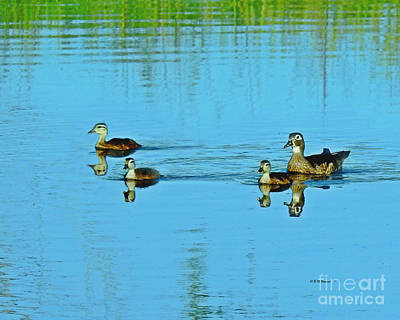 Photograph - Family Swim On Willow Pond by Kathy M Krause