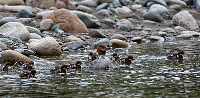 Photograph - Family Swim by Randy Hall