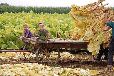 Family Tobacco Harvest Art Print by Joyce Huhra
