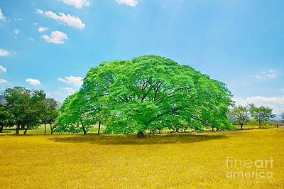 Juan Bosco Forest Animals Royalty Free Images - Family Tree Royalty-Free Image by John Stuart