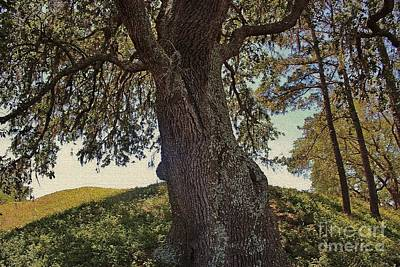Photograph - Family Tree by Paulette Thomas